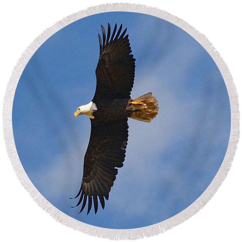Eagle Round Beach Towel featuring the photograph Fly Eagles Fly by Cindy Manero