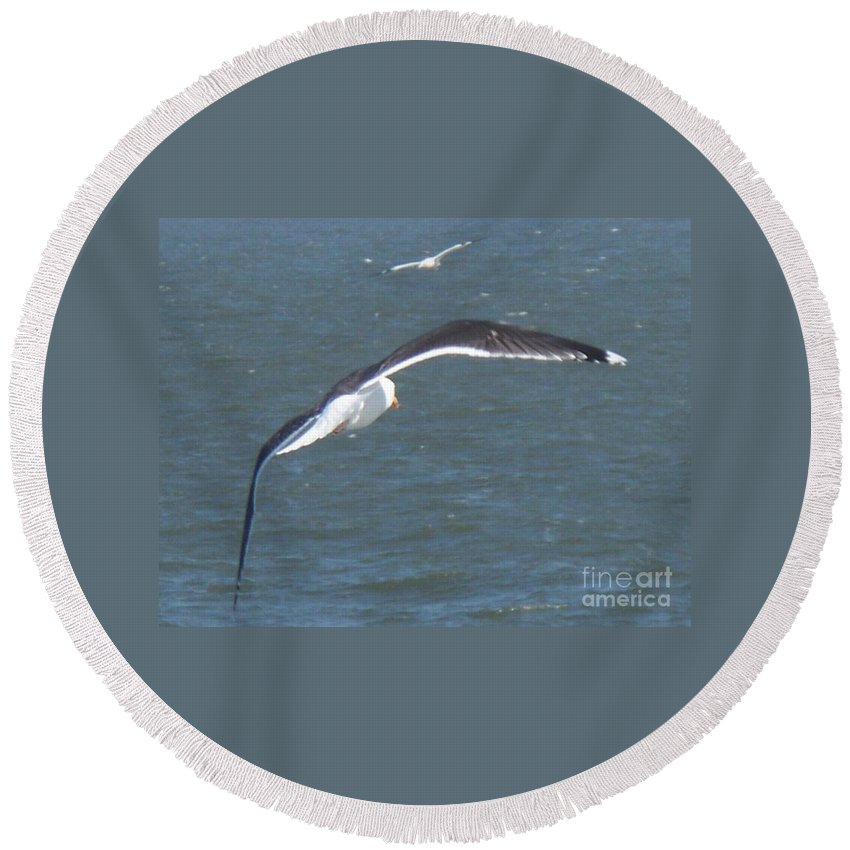 Bird Round Beach Towel featuring the photograph Flying On A Breeze by Eric Schiabor