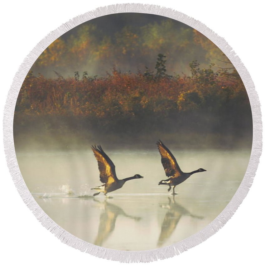 Canada Geese Round Beach Towel featuring the photograph Foggy Autumn Morning by Elizabeth Winter