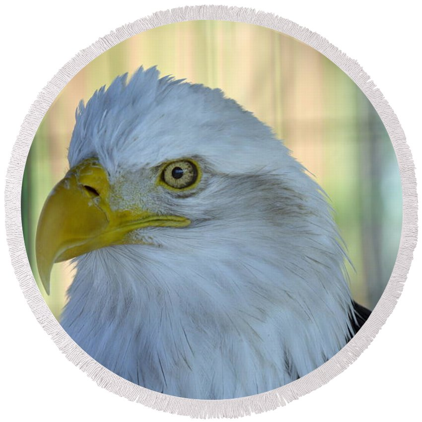 Eagle Round Beach Towel featuring the photograph Fontana Eagle Portrait 4 by Bonfire Photography