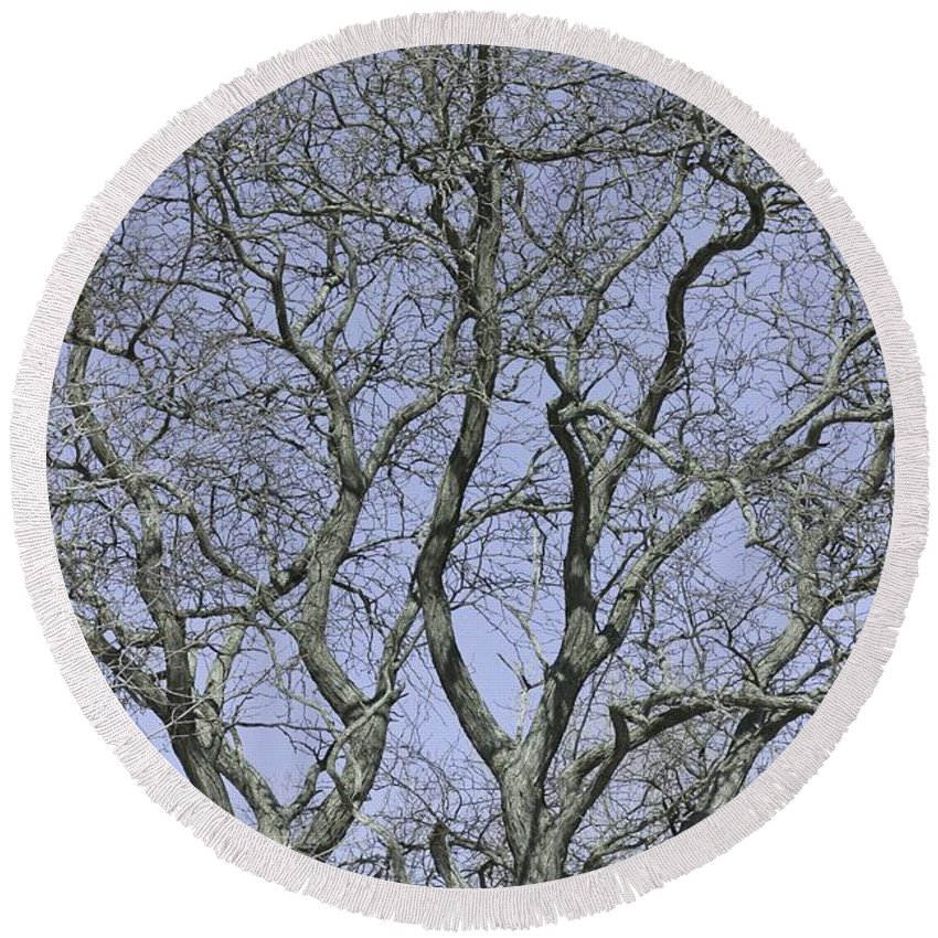 Trees Round Beach Towel featuring the photograph For The Love Of Trees - 2 by Hany J