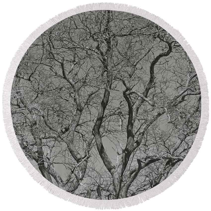 Trees Round Beach Towel featuring the photograph For The Love Of Trees - 2 - Monochrome by Hany J