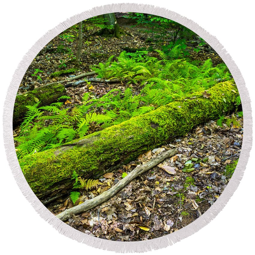 Gosnell Big Woods Round Beach Towel featuring the photograph Forest Floor Gosnell Big Woods by Tim Buisman