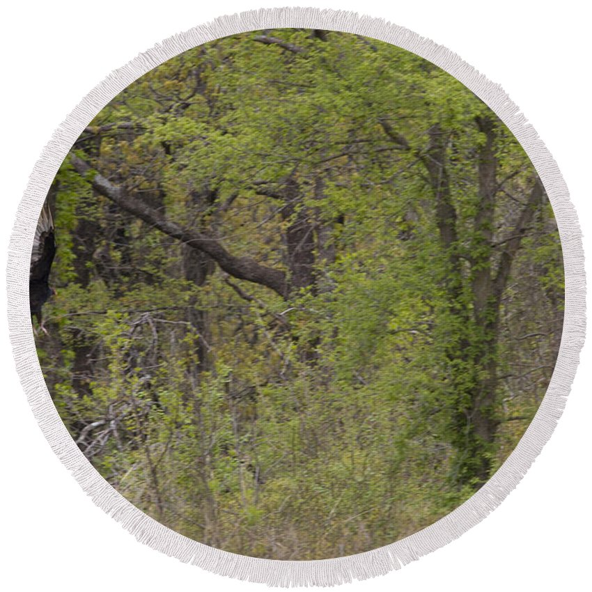 Great Blue Heron Photographs Round Beach Towel featuring the photograph Forest Glimpse by Vernis Maxwell