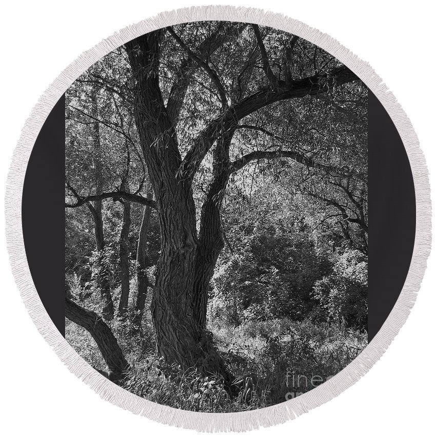 Forest Round Beach Towel featuring the photograph Forest Light by Ann Horn