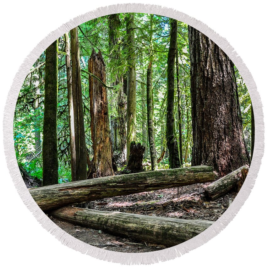Old Growth Forest Round Beach Towel featuring the photograph Forest Of Cathedral Grove Collection 2 by Roxy Hurtubise