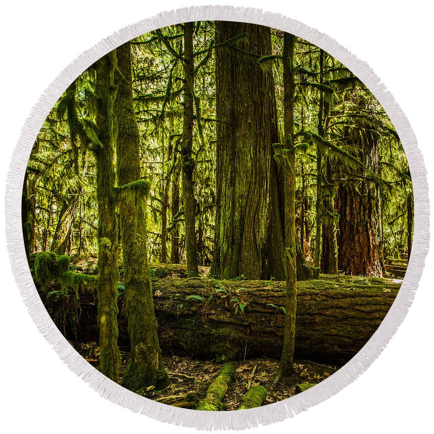 Old Growth Forest Round Beach Towel featuring the photograph Forest Of Cathedral Grove Collection 3 by Roxy Hurtubise