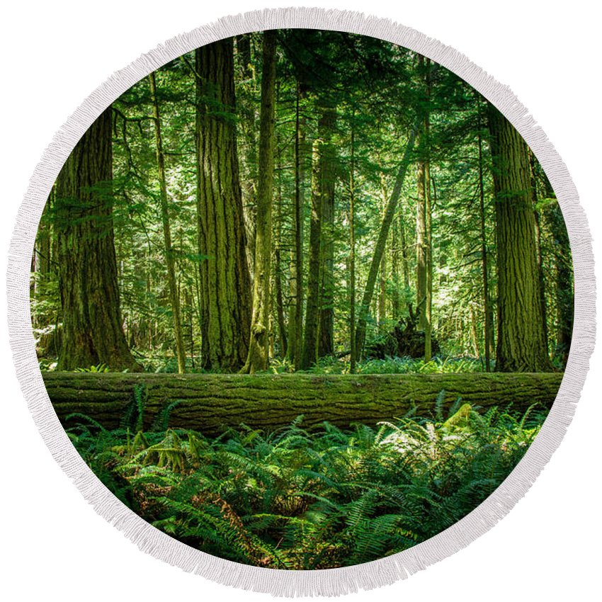 Old Growth Forest Round Beach Towel featuring the photograph Forest Of Cathedral Grove Collection 7 by Roxy Hurtubise