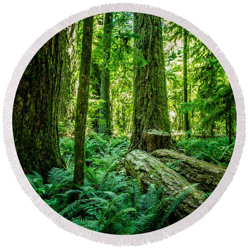 Old Growth Forest Round Beach Towel featuring the photograph Forest Of Cathedral Grove Collection 8 by Roxy Hurtubise