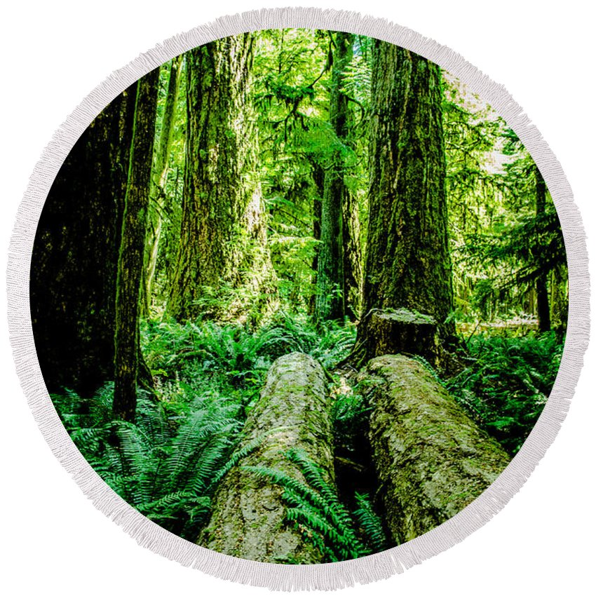 Old Growth Forest Round Beach Towel featuring the photograph Forest Of Cathedral Grove Collection 9 by Roxy Hurtubise