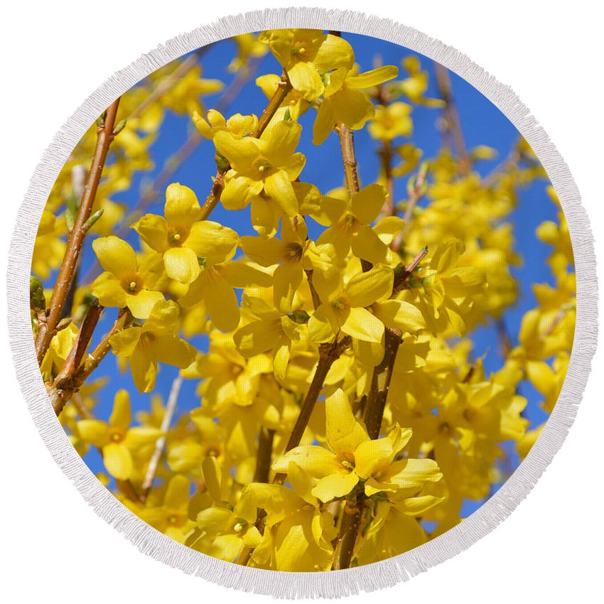 Forsythia Round Beach Towel featuring the photograph Forsythia On Blue by Meandering Photography