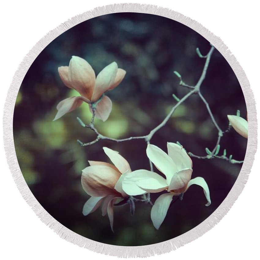Magnolia Round Beach Towel featuring the photograph Four Magnolia Flower by Marianna Mills
