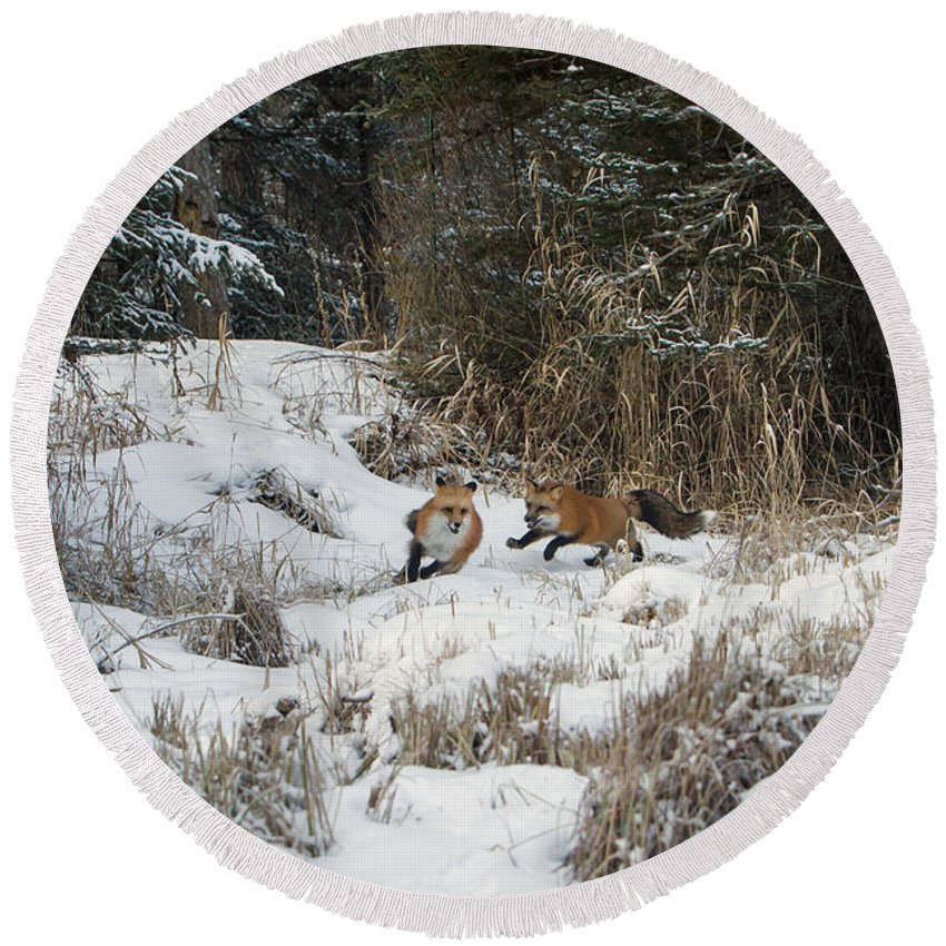Fox Round Beach Towel featuring the photograph Fox Hollow by Jack Bell