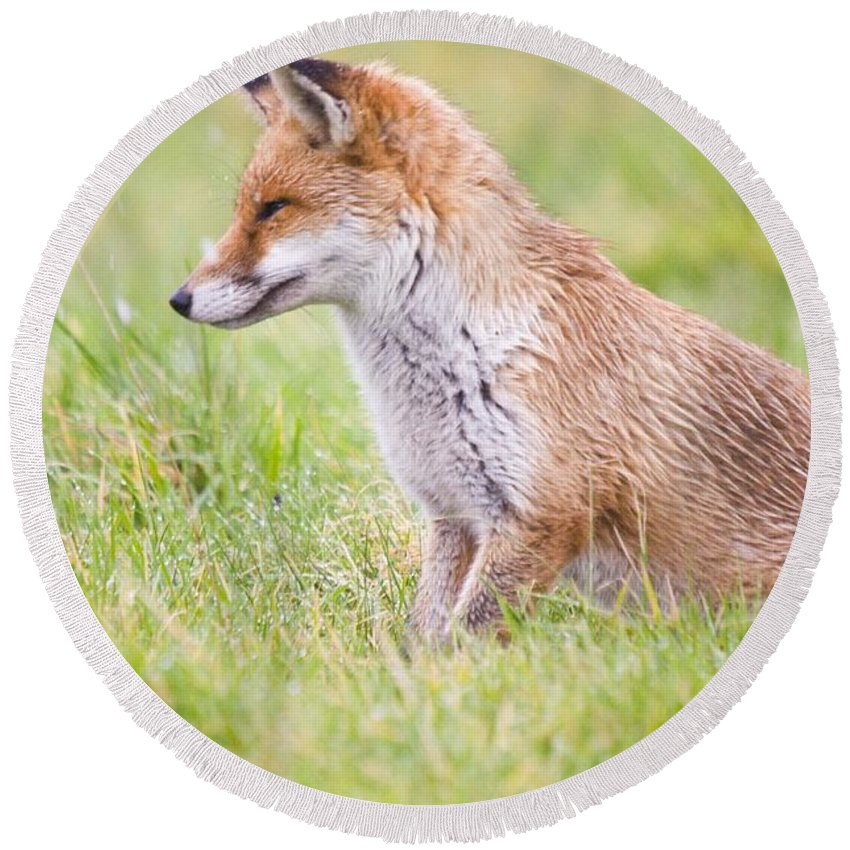 Fox Round Beach Towel featuring the photograph Fox by Jenny Potter