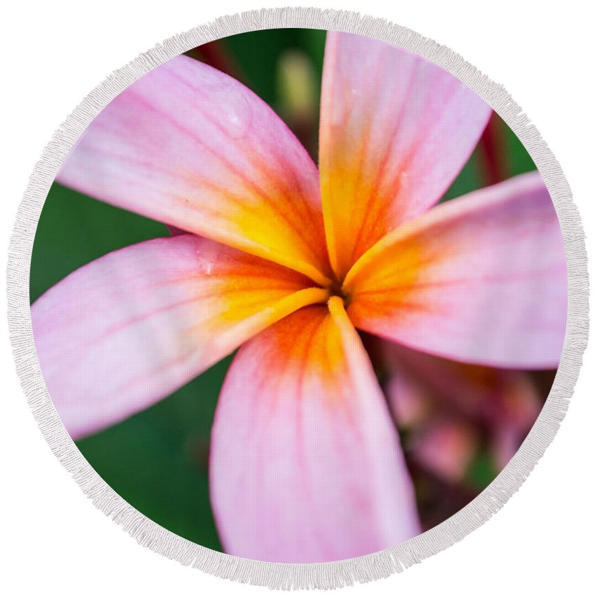 Plumeria Round Beach Towel featuring the photograph Frangipani by Parker Cunningham