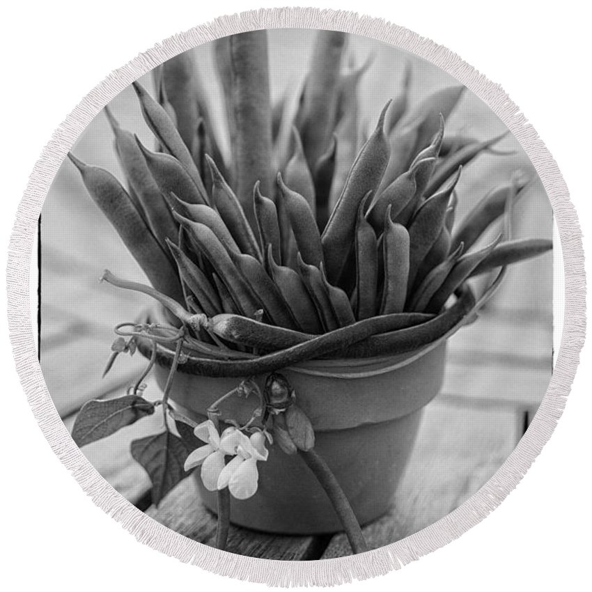 Iris Holzer Richardson Round Beach Towel featuring the photograph Fresh Green Beans In Pot by Iris Richardson