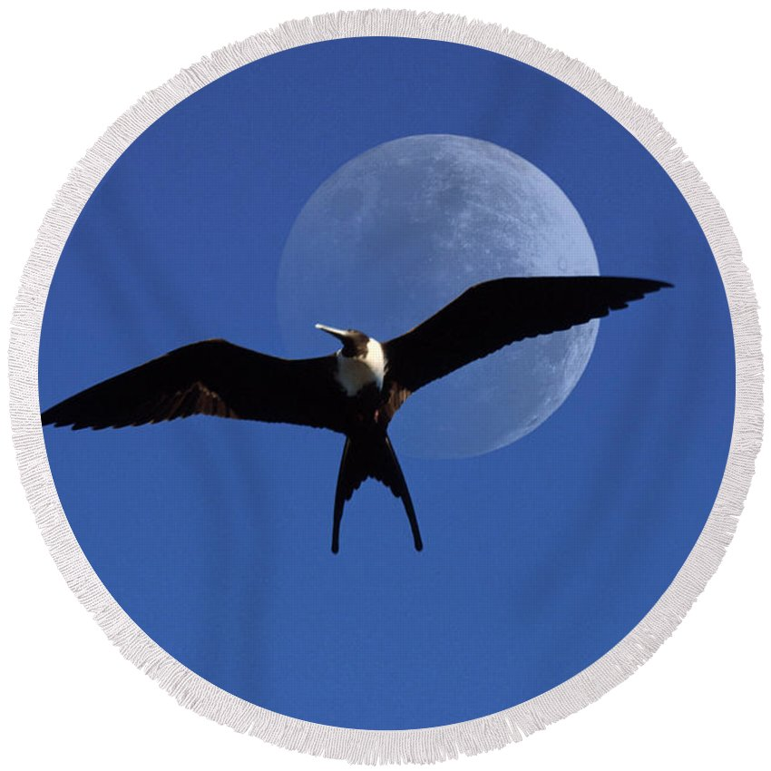 Frigate Round Beach Towel featuring the photograph Frigatebird Moon by Jerry McElroy