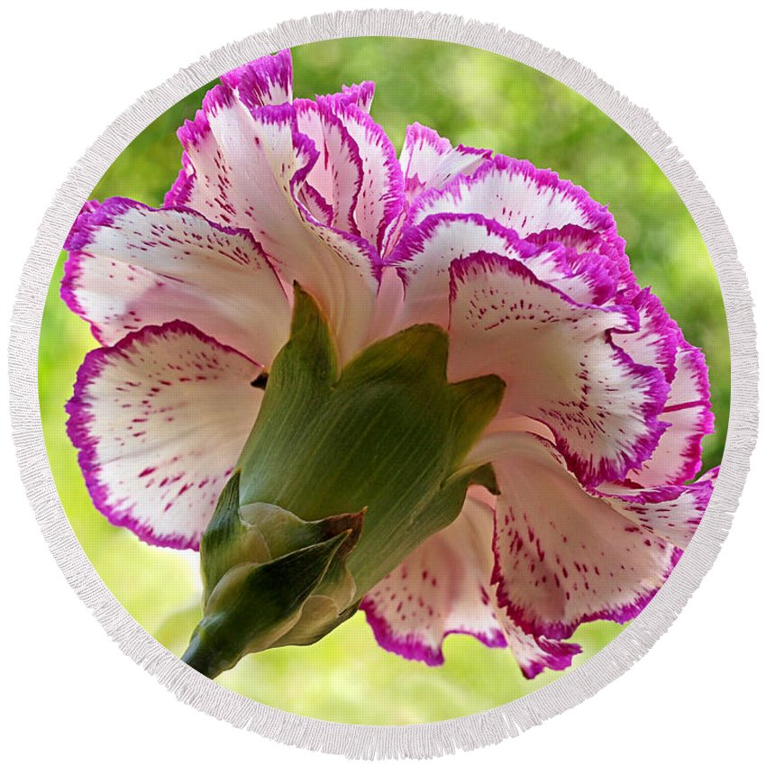 Pink Flower Round Beach Towel featuring the photograph Frilly Carnation by Gill Billington