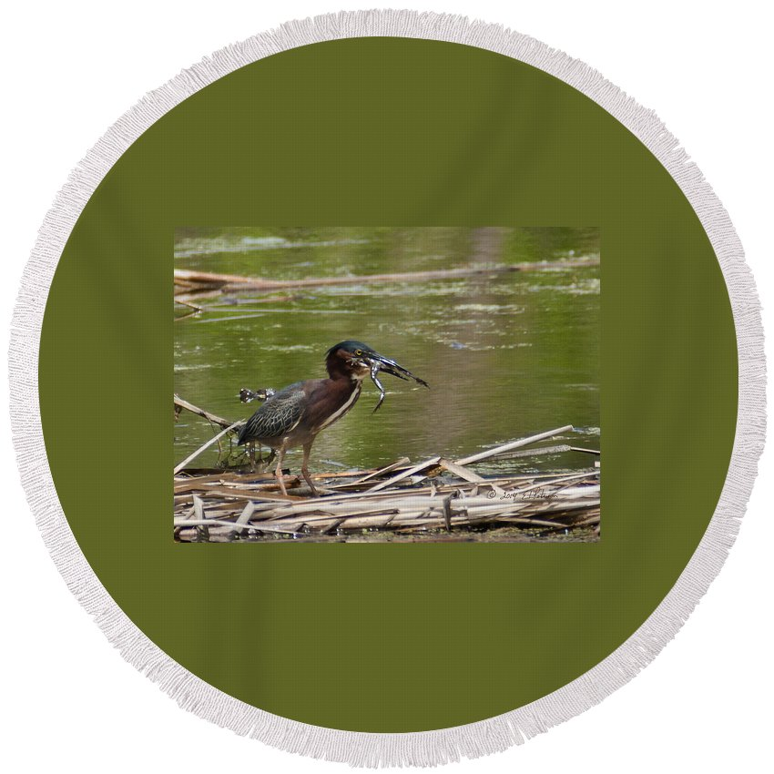 Spring Round Beach Towel featuring the photograph Frog Legs And Green Heron by Edward Peterson