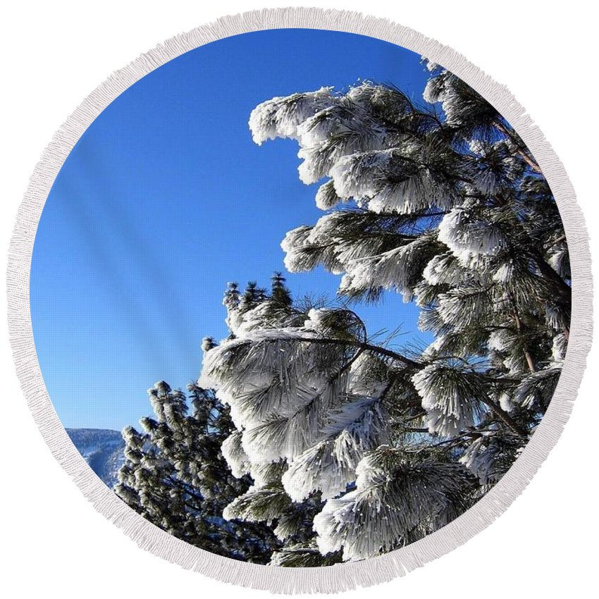 Frost Round Beach Towel featuring the photograph Frosty Limbs by Will Borden