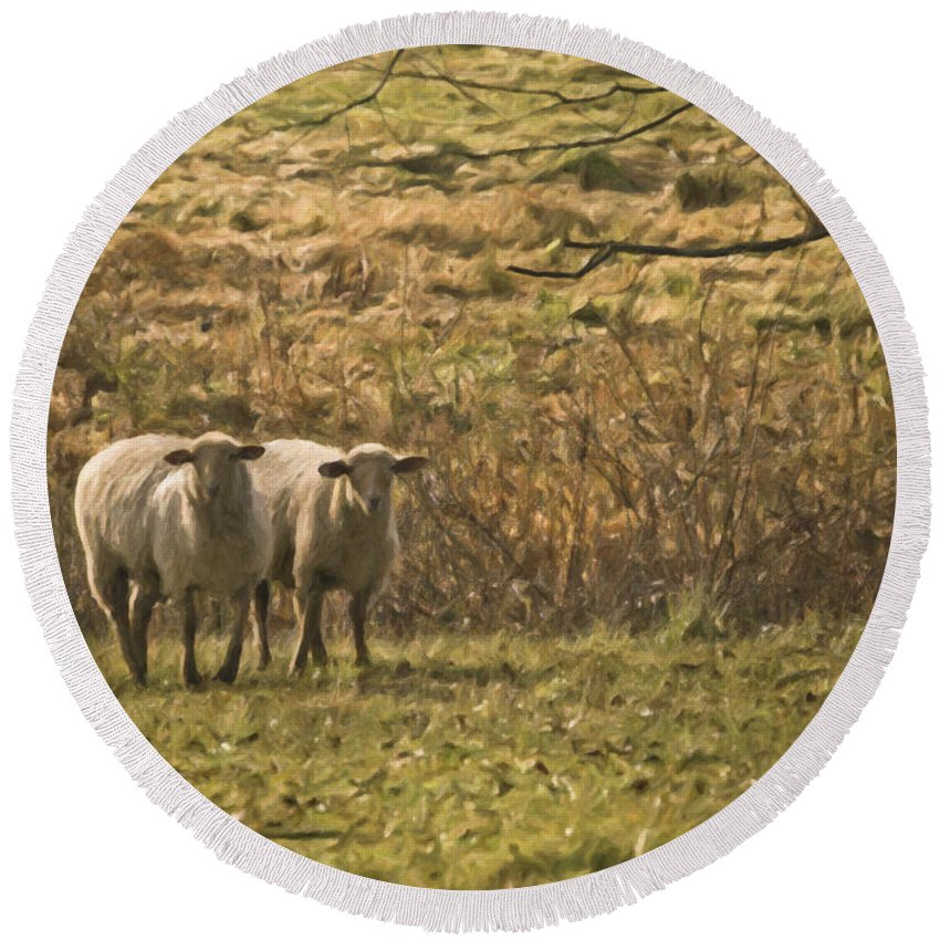 Sheep Round Beach Towel featuring the photograph Full Of Wool by Trish Tritz