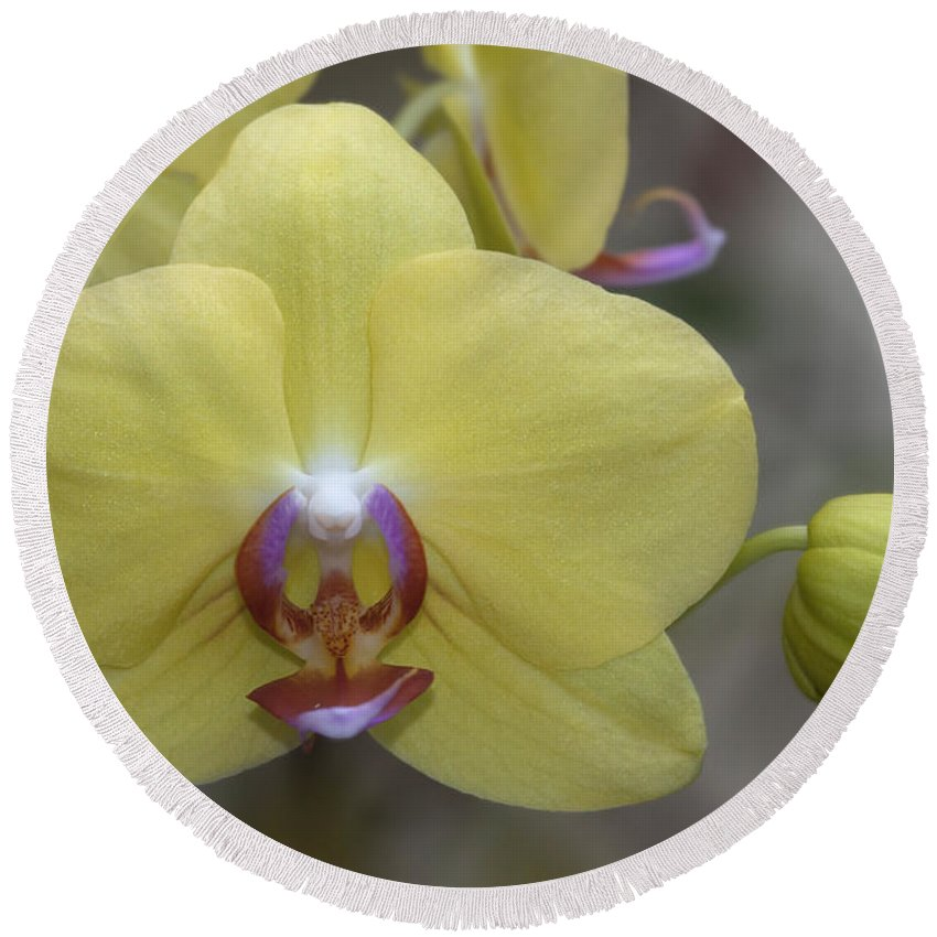 Yellow Round Beach Towel featuring the photograph Fuller's Sunset Orchid by Meg Rousher