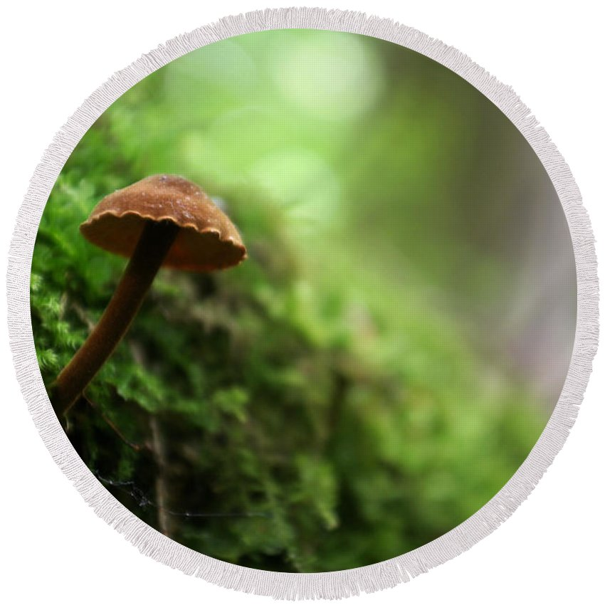 Fungus Round Beach Towel featuring the photograph Fungus 4 by Allan Lovell