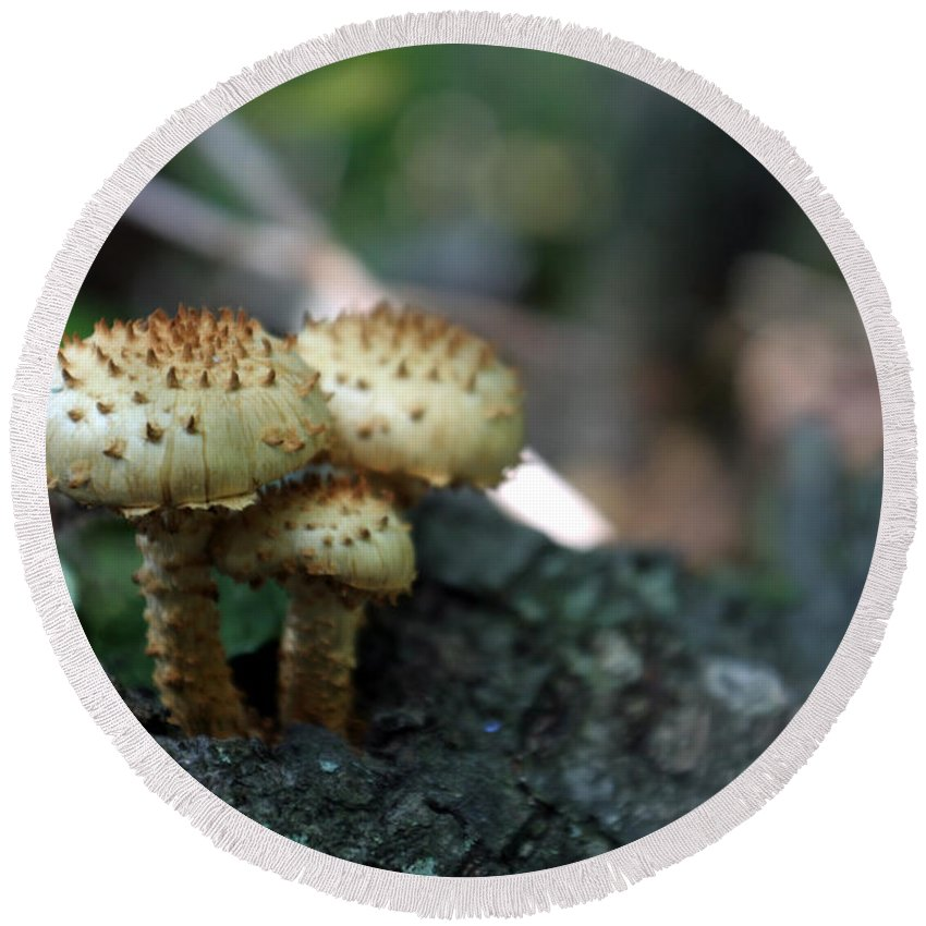 Fungus Round Beach Towel featuring the photograph Fungus 8 by Allan Lovell