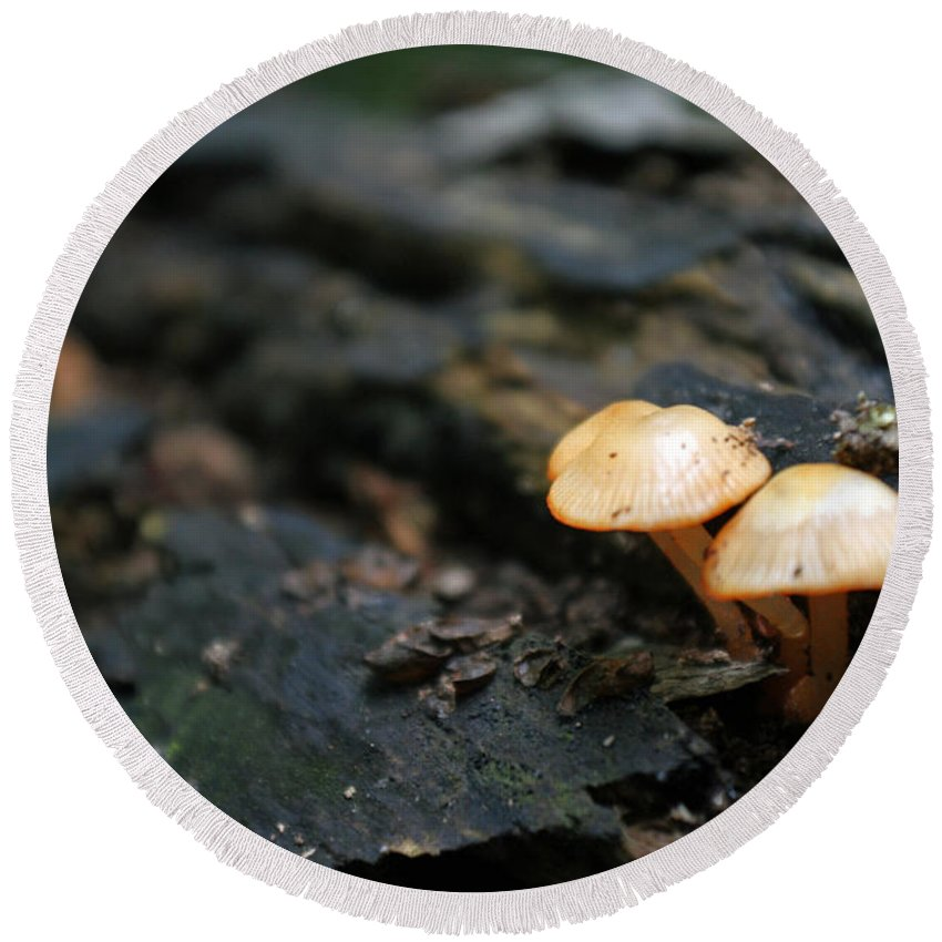 Fungus Round Beach Towel featuring the photograph Fungus 9 by Allan Lovell