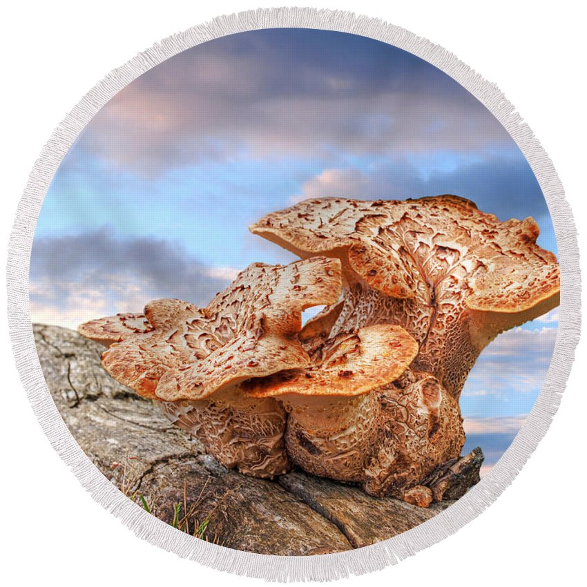 Tree Fungus Round Beach Towel featuring the photograph Funky Fungi by Gill Billington