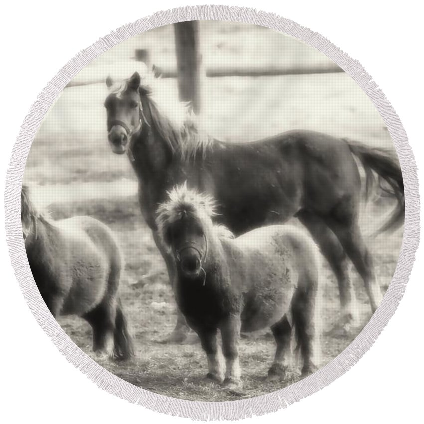 Ponies Round Beach Towel featuring the photograph Fuzzy Ponies by Alice Gipson
