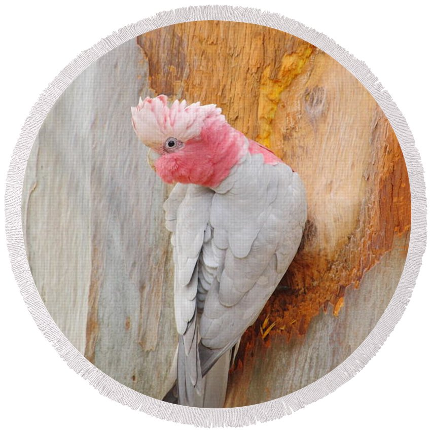 Galah Round Beach Towel featuring the photograph Galah 2AM-29701 by Andrew McInnes