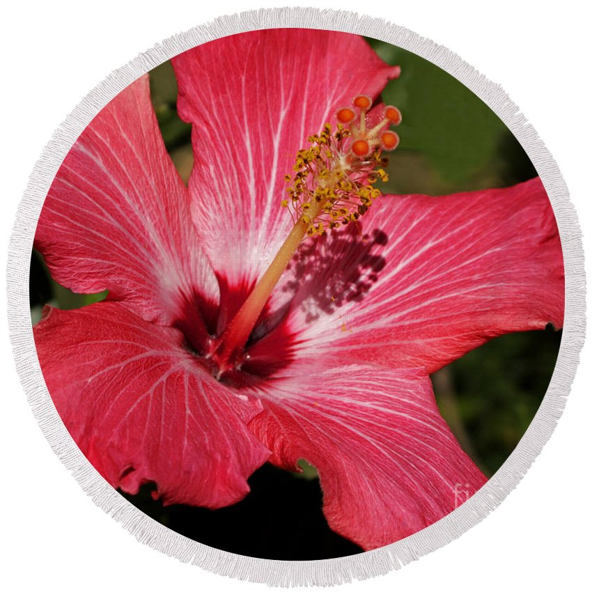 Hibiscus Round Beach Towel featuring the photograph Garden Beauty by Ann Horn