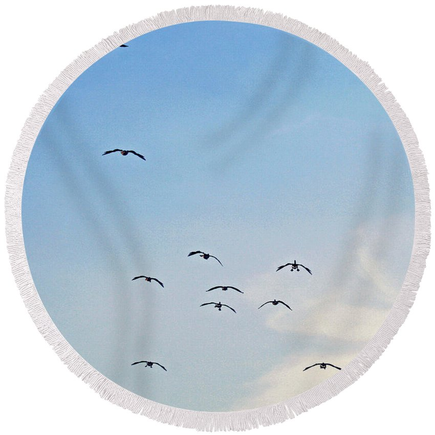 Geese Round Beach Towel featuring the photograph Geese Flying by Karen Adams