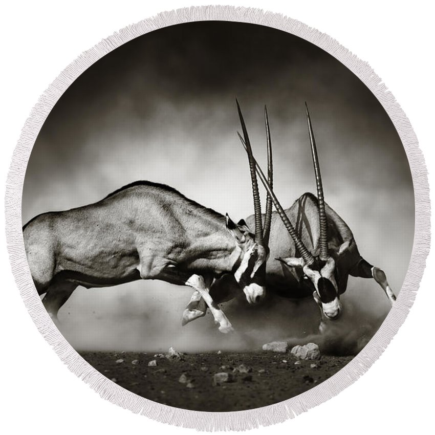 Gemsbok Round Beach Towel featuring the photograph Gemsbok Fight by Johan Swanepoel