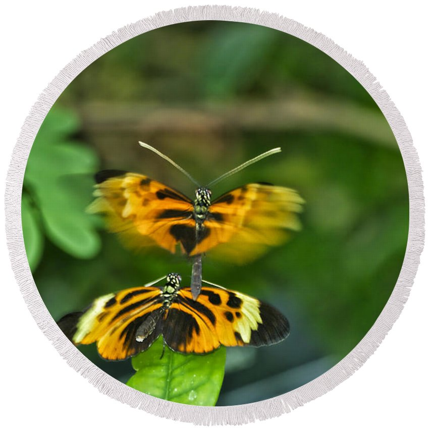 Mating Round Beach Towel featuring the photograph Gentle Butterfly Courtship 03 by Thomas Woolworth