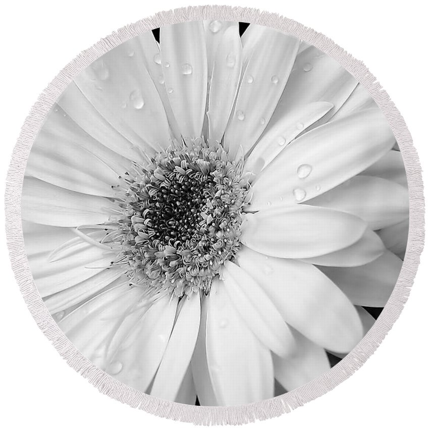 Daisy Round Beach Towel featuring the photograph Gerber Daisies In Black And White by Jennie Marie Schell