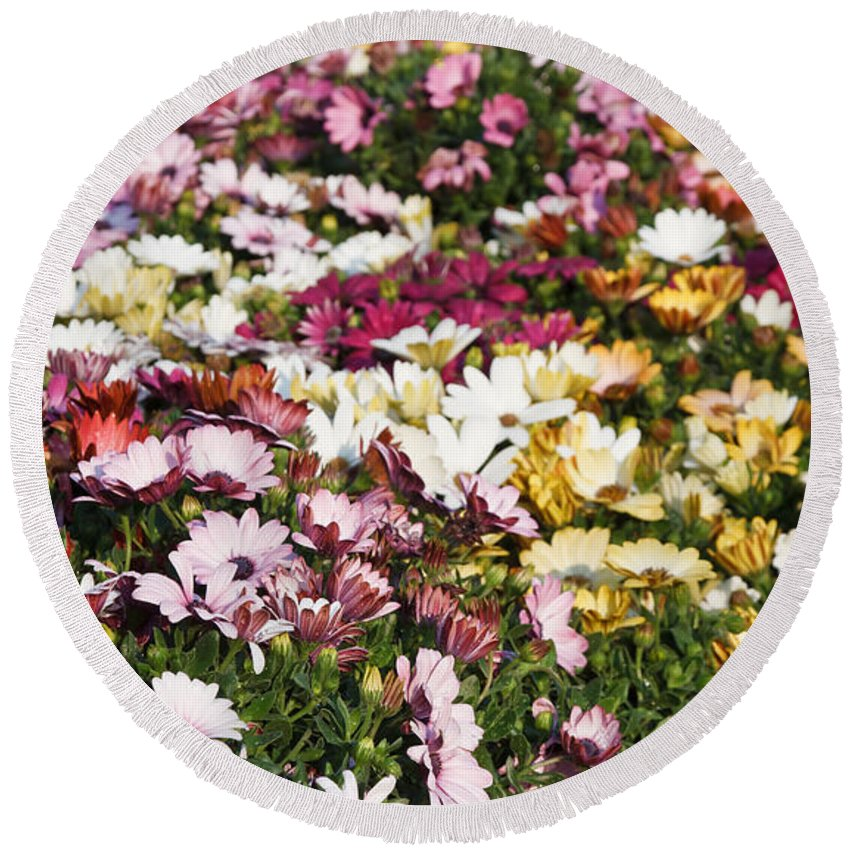 Background Round Beach Towel featuring the photograph Gerbera Flowers by Antonio Scarpi