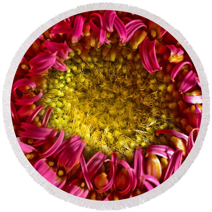 Flower Round Beach Towel featuring the photograph Gerbera by Jess Kraft