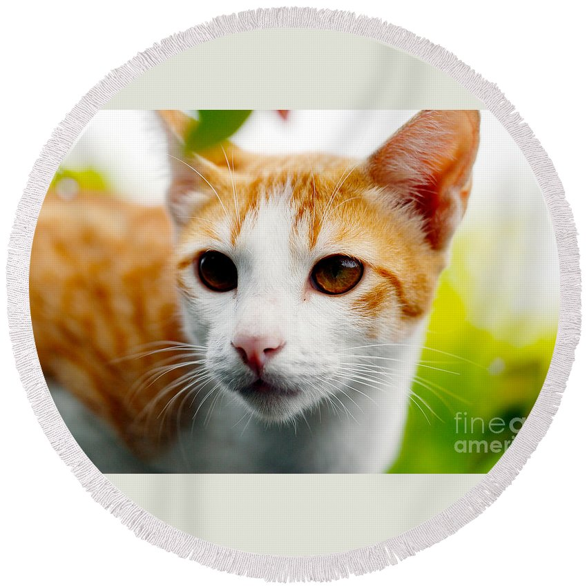 Tabby Cat Photo Round Beach Towel featuring the photograph Getting Ready For The Hunt by Ivy Ho