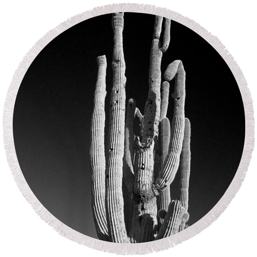 Giant Round Beach Towel featuring the photograph Giant Saguaro Cactus Portrait In Black And White by James BO Insogna