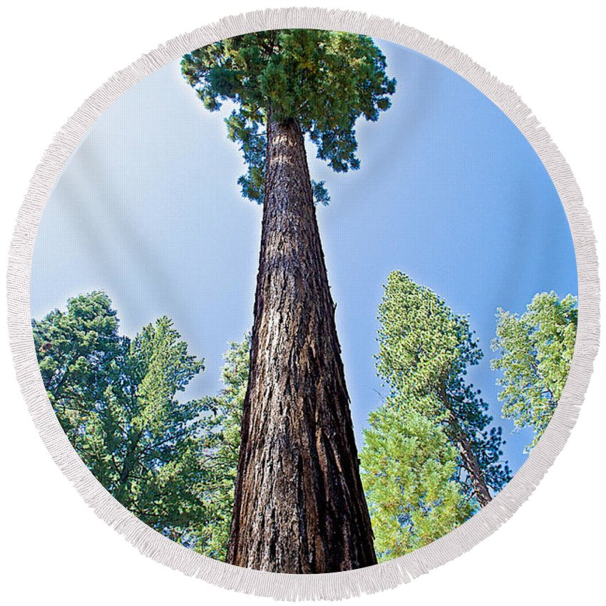 Giant Sequoia In Mariposa Grove In Yosemite National Park Round Beach Towel featuring the photograph Giant Sequoia In Mariposa Grove In Yosemite National Park-california by Ruth Hager