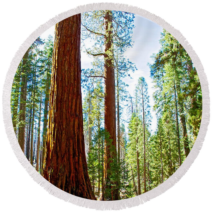 Giant Sequoias In Mariposa Grove In Yosemite National Park Round Beach Towel featuring the photograph Giant Sequoias In Mariposa Grove In Yosemite National Park-california by Ruth Hager