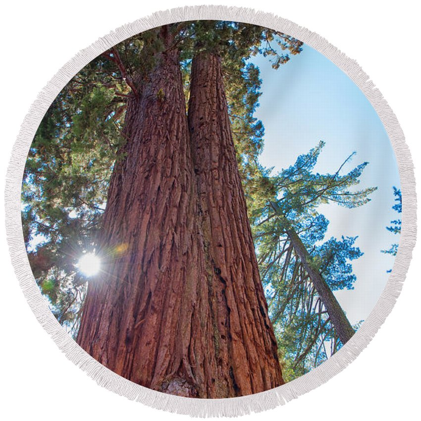Landscape Round Beach Towel featuring the photograph Giant Sequoias by John M Bailey