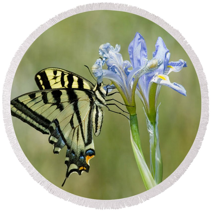Fauna Round Beach Towel featuring the photograph Giant Swallowtail Butterfly by Anthony Mercieca