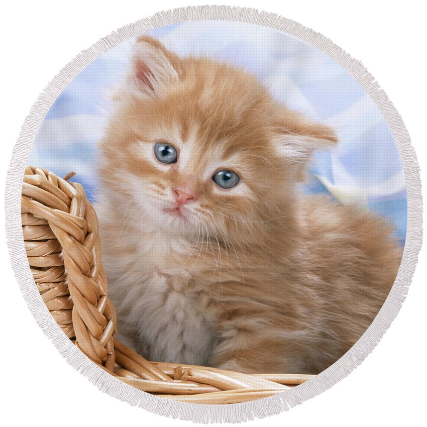 Cat Round Beach Towel featuring the photograph Ginger Kitten In Basket by John Daniels