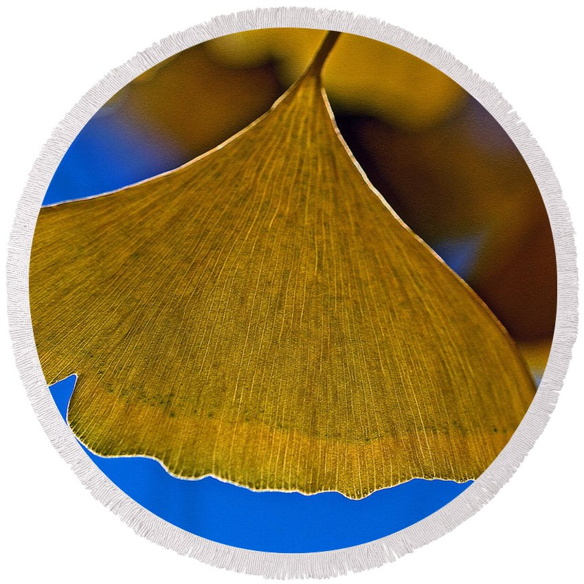 Gingko Leaf Round Beach Towel featuring the photograph Gingko Leaf Losing Chlorophyll by Bill Owen