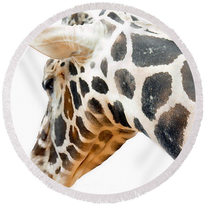 Giraffe Round Beach Towel featuring the photograph Giraffe by Adam Vance