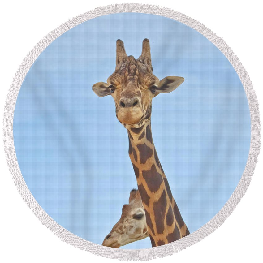 Animal Round Beach Towel featuring the photograph Behind Every Great Male by Robert Frederick