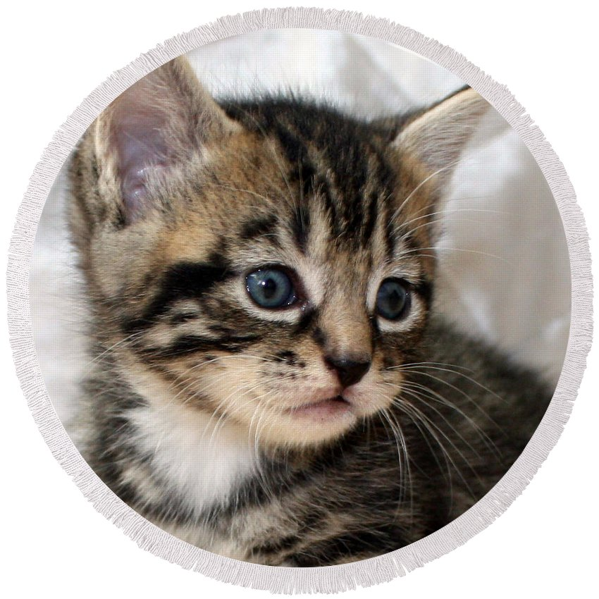 Kitten Round Beach Towel featuring the photograph Gizmo The Kitten by Terri Waters
